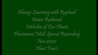 Always Learning with Raphael Dawn Redwood