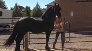 Horse gallops in excitement upon owner's arrival - Video