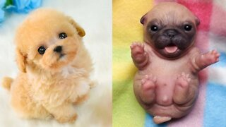 😍 Cute Puppies Doing Funny Things 2020 😍 - Cute VN