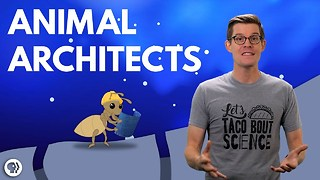 S4 Ep36: How Ingenious Animals Have Engineered Air Condition - Video