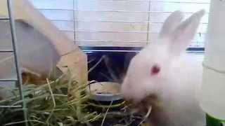 Hungry Rabbit Devours Tasty Snack - Video
