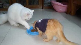 They never taught this cat how to share food!