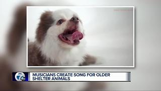 Song by local musicians about adopting senior dogs going viral
