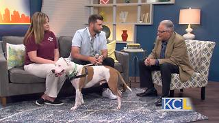 Royals catcher Drew Butera helping homeless animals - Video
