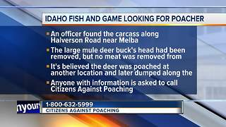 Idaho fish and Game asks for the public's help in poaching case - Video