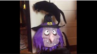 Crazy jumping cat gets ready for Halloween