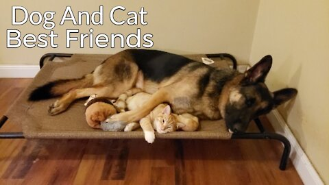 CATS AND DOGS Awesome Friendship - Funny Cat and Dog HD 1080