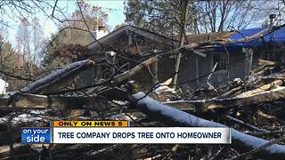 Elderly man injured after company cut down tree, sent it crashing into Sagamore Hills home - Video