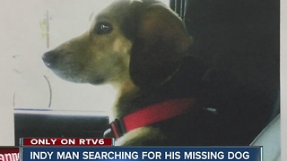 Indianapolis man searching for lost dog - Video
