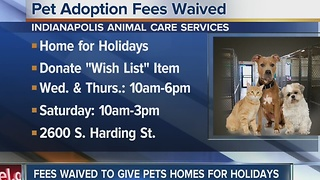 Indianapolis shelter offering free adoptions - Video