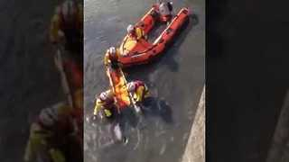 Porpoise Rescued After Getting Stuck in Mud in Scarborough Harbour - Video