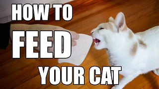 How To Feed Your Cat - Video