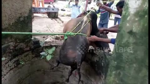 Bull rescued from 35-foot well by farmers using crane in India