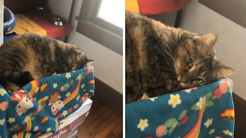 Cat pretends to sleep to avoid taking her medicine