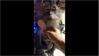 Monkey demands to be gently brushed by caretaker