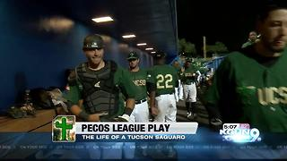 Pecos League Play: The life of a Tucson Saguaro - Video