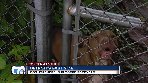 Dog stranded by flooding on Detroit's east side