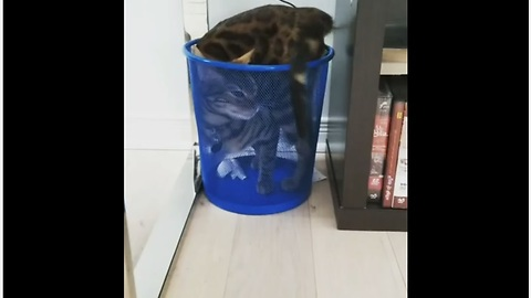 Weirdo cat decides to chill in empty garbage can
