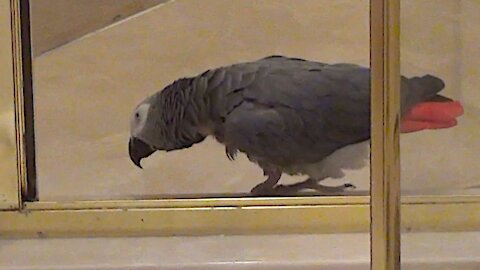 "Proud parrot ""does his business"" in the shower"