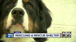Tempe animal shelter in need of rescuing - Video