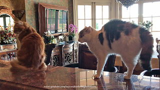 Funny Cats Meet Newly Adopted Great Dane For The First Time