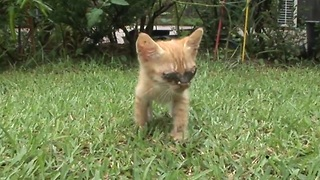 Blind Kitten Look The World For The First Time