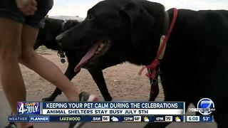 Preparing your pet for the July 4th celebrations - Video