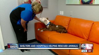 Local animal shelters are looking for people to adopt or foster pets rescued from Hurricane Michael