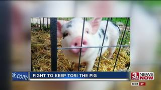 Papillion councilman may propose pig ordinance - Video