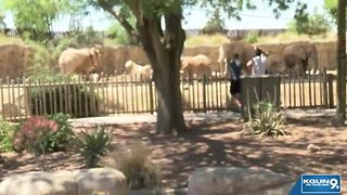 Elephant dies at Reid Park Zoo - Video