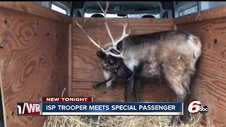 Trooper meets reindeer during traffic stop on I-74 - Video