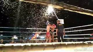 Boxing match called off after invasion of giant moths - Video