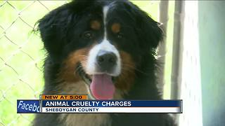 Sheboygan County dog abuse suspects face a combined 113 charges - Video