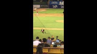 Adorable dog retrieves bat at minor league baseball game - Video