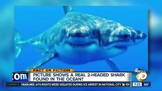 2-headed shark? - Video