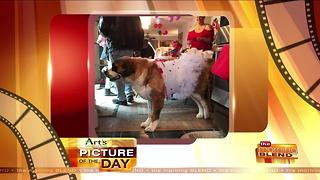 Art's Cameras Plus Picture of the Day for May 11! - Video