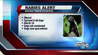 Skunk tests positive for rabies in Cochise County