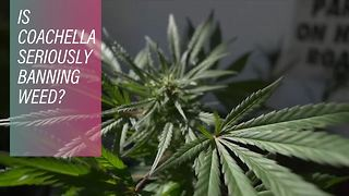 Coachella bans weed after California legalizes - Video