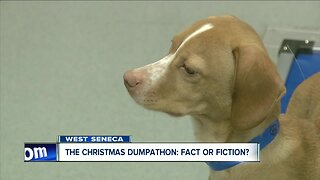 Returning gifted pets after Christmas... Shelters warn against it, but does it really happen?