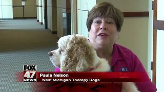 Courtroom dogs more common in Michigan