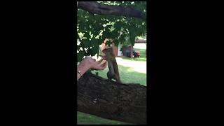 Playful squirrel shows off impressive boxing skills