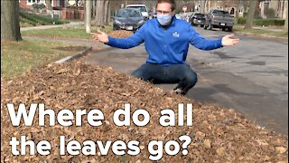 What happens to all the leaves that fall of trees