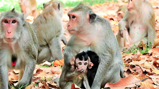 Very Cute Monkey Come To See Tourist - Video
