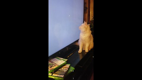 Playful cat hunts down loading circle on TV