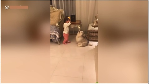 Pooch Is Desperate To Calm His Human Friend Down