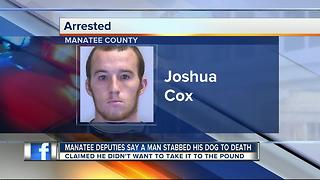 Bradenton man admits to stabbing dog to death - Video