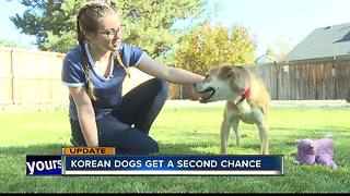 Dogs rescued from South Korean meat market adjusting to their new lives in the Treasure Valley - Video