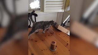 """""""Cats Are Jerks: Funniest Clips of Cats Destroying Things"""""""