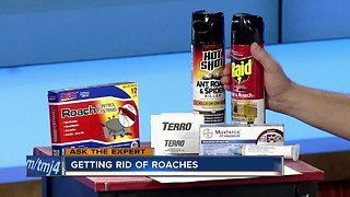 Ask the Expert: Getting rid of roaches