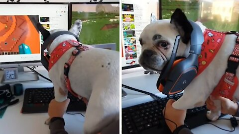 Gamer dog is ready for the weekend